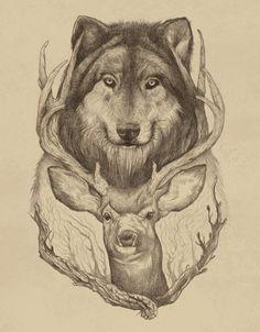 wolf & deer sketch