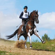 #Horse #Eventing #Crosscountry