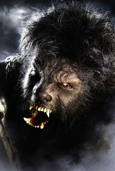 A gallery of 78 The Wolfman publicity stills and other photos. Featuring Benicio del Toro, Emily Blunt, Anthony Hopkins, Hugo Weaving and others. Horror Films, Horror Art, Horror Icons, Horror Quotes, The Wolfman 2010, Wolfman Movie, Real Werewolf, Werewolf Art, Werewolf Makeup