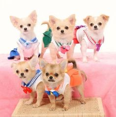 Sailor Moon Dog Costumes