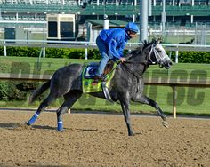Caption: Frosted on the track for first time<br /> Horses on the track at Churchill Downs on Sun. April 29, 2015, in Louisville, Ky., in preparation for the Kentucky Derby and Kentucky Oaks.<br /> Wed4_29 Edit image559<br /> Photo by Anne M. Eberhardt