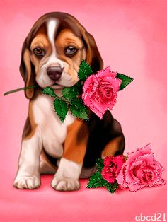 ✧Ꮆifs-Pictures in Motioŋ✧ Animals And Pets, Baby Animals, Cute Animals, Cute Little Dogs, Cute Dogs, Cute Images, Cute Pictures, Kitten Love, Photocollage