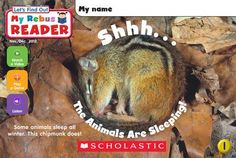 Shhh. . . The Animals Are Sleeping! hibernation video