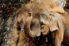 Matriarch Photo by Tom Page -- National Geographic Your Shot
