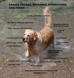 """Frases hechas, expresiones, refranes con """"perro""""."""