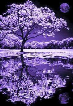Absolutely beautiful black and white photo of tree and moon reflection. Absolutely beautiful black and white photo of tree and moon reflection. Landscape Photography, Art Photography, Female Photography, Infrared Photography, Moonlight Photography, Reflection Photography, Landscape Photos, Landscape Art, Wedding Photography