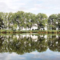 #szajol #samsunggalaxya5 #lake #waterside #beautiful #nature #watersurface #greennature #nofilter #naturelovers Green Nature, Reflection, Instagram Posts, Beautiful