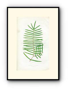Edward Joseph Lowe Fern (Gleichenia Semivestita) Antique Botanical Print, 1860 Wood Block Engraving, Book Plate by TheOldMapShop on Etsy