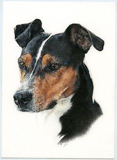 Bodeguero andaluz. Ratonero. Ilustración lápiz. Illustration pencil. Dog portrait Illustration, Dogs, Leo, Animals, Cute Animal Memes, Beautiful Cats, Portraits, Greyhounds, Drawings
