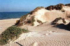 Valencia. Dunas de la playa El Saler.