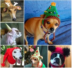 Crochet and Knitted Dog Hats FREE Patterns