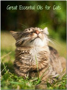 Healing Oils For Animals: Essential Oils for Cats
