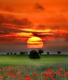 Sunset on poppies
