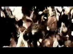 Madrugada dos Mortos - abertura - YouTube