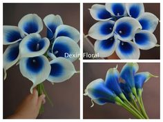 9pcs ~ 36pcs Natural Real Touch Royal Blue Picasso Calla Lily Stems for Wedding Bridal Bouquets, Centerpieces, Decorations