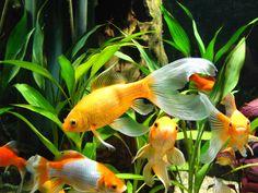 Aquarium | Flickr - Photo Sharing!