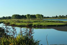 Whakatane River New Zealand  #landscape #whakatane #river #zealand #photography