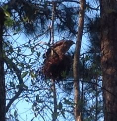 Whispering Pines Mobile Home Park In Tyrone Photo Ben Nelms See More Hawk Tree GeorgiaPhoto Galleries