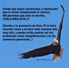Imagenes de Aguilas Con Reflexiones De Superacion Y Motivacion