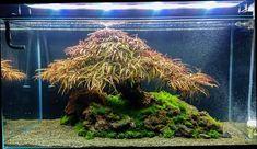 Paludarium, Fish Swimming, Aquascaping, Swim Swim, Animals And Pets, Fresh Water, Plants, Inspiration, Amazons