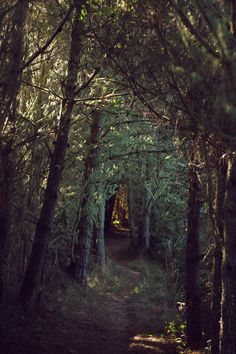 The woods are lovely, dark and deep… seriously my favorite place in the world.