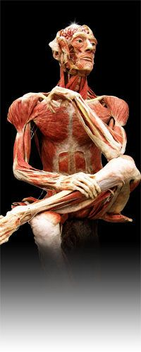 Body Worlds is at the Science Center!  I've always wanted to see an exhibit like this...