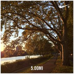 Sunset runs are even more gorgeous in fall with golden leaves  #nikeplus #garmin #nofilter #fall #halfmarathontraining #pegasus #CambridgeMA #charlesriver #CambMA #sunset #fitfam #plantbased #vegan #poweredbyplants #seemycity #instamood #runmycity #instarunners #veganrunner #phdrunner #September #peakweek by yaseminkg September 17 2015 at 07:39PM
