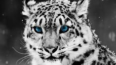 animals - Hľadať Googlom