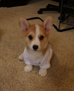 A cute little baby puppy :)