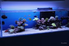 Best tanks from around the world. - Page 20 - Reef Central Online Community