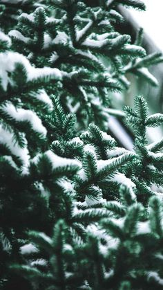 Christmas Background HD for iPhone