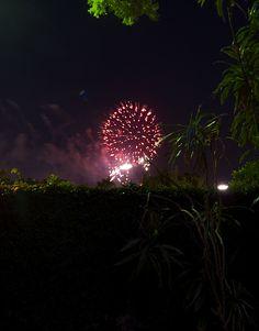 IMG_2774_2 New Years Eve, Nye, Fireworks, Dandelion, Neon Signs, Celestial, Explore, Flowers, Plants