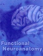 Functional Neuroanatomy