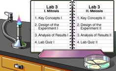 Pearson - The Biology Place Online lab bench activity- mitosis and meiosis