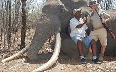 A hunter, allegedly a German national, celebrates with a guide after culling a huge elephant