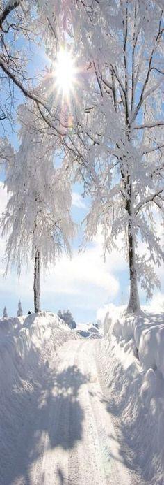 Bright snowy sunny morning