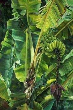 """Garden Bananas"" Hand Signed Limited Edition Giclee at Maui Hands Tropical Art, Tropical Garden, Tropical Plants, Watercolor Landscape, Watercolor Art, Maui, Jungle Art, Tree Sketches, Hawaiian Art"