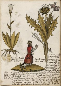 This week's #ManuscriptMonday word is 'Herbal'. A text dealing with plants and their properties, often medicinal. The study of plants formed part of natural philosophy during Antiquity. Among the major authors of botanical texts written from the fourth century B.C. to the fourth century A.D. were Aristotle and Hippocrates.