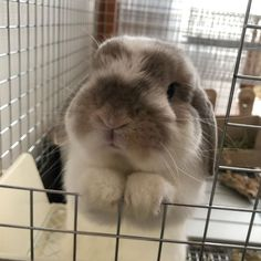 The cutest face to see.a rabbit (or really any animal) begging. Cute Little Animals, Cute Funny Animals, Cute Baby Bunnies, Cute Babies, Fluffy Animals, Animals And Pets, Lapin Art, Cute Animal Pictures, Cute Creatures