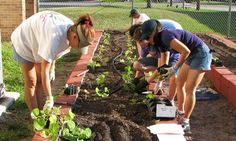 Come fare un orto in giardino: la nostra guida con suggerimenti per curare e coltivare al meglio il vostro piccolo orto fai da te e ricavare ottime verdura