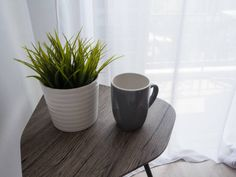 green plant in white pot and gray cup on the table for room interior