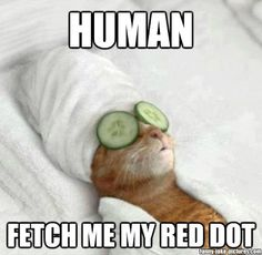 Funny Pampered Cat Meme