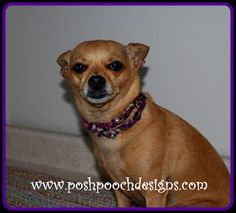 Posh Pooch Designs Dog Clothes: Twilight Sparkle Beaded Necklace for You and Your Dog Crochet Pattern | Posh Pooch Designs