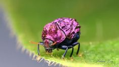 Leaf Beetle -Inspirational Video – Biomimicry for Young Children Leaf Beetle, Inspirational Videos, Young Children, Bugs, Leaves, Animals, Insects, Little Boys, Animales