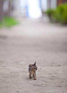 baby kitt'in