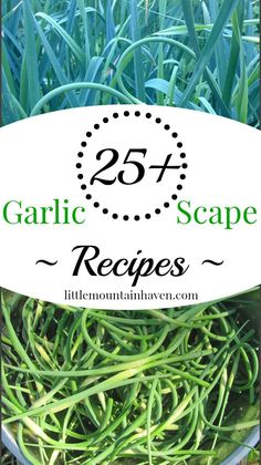 25+ Garlic Scape Recipes from Little Mountain Haven