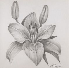Beautiful Pencil Drawings, Pencil Drawings Of Flowers, Pencil Sketch Drawing, Dark Art Drawings, Art Drawings For Kids, Graphite Drawings, Pencil Art Drawings, Realistic Flower Drawing, Floral Drawing