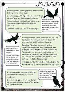 Raben und Krähen: Infos, Lesetexte, Wissenskarten