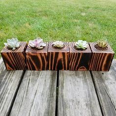 Succulent Planter set of 3 cactus planter indoor plants