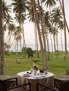 Amanwella is a luxury Sri lanka hotel which hugs the  Indian Ocean (I want this life. Just once.)